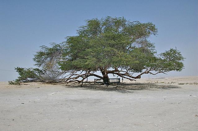 Trees Part 4